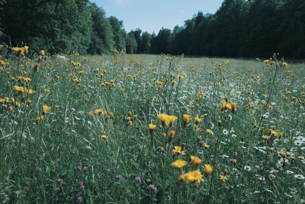 flowers afield